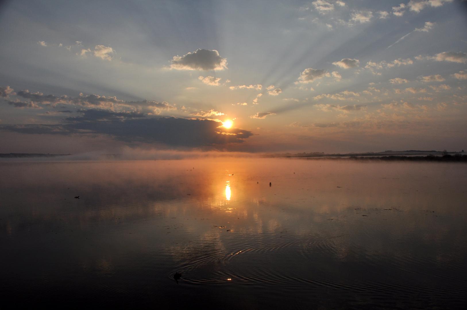 Bad Buchau/    Der Morgen am See