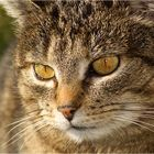 bad look ... - catviews #4