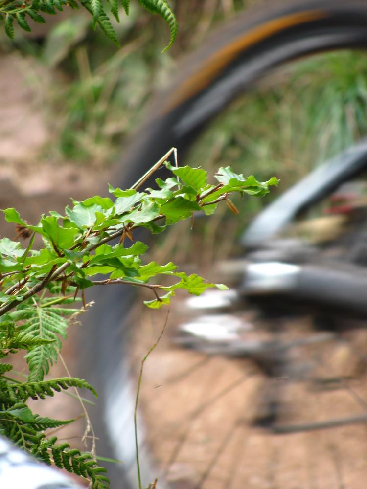 Bad wildbad 2009 III
