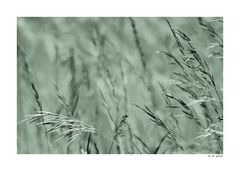 Badberg-Gras