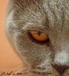 badcat
