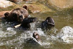 Bade-Bär