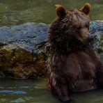 BadeBär