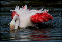Badender Flamingo