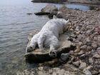 Badepause in Kroatien