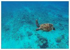 Badespaß auf Curacao