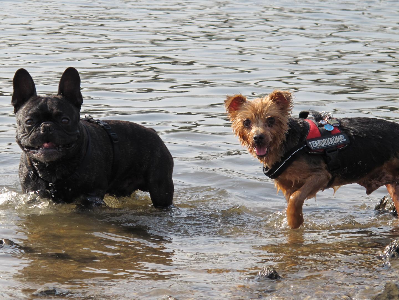 Badespass mit Sam und Sammy