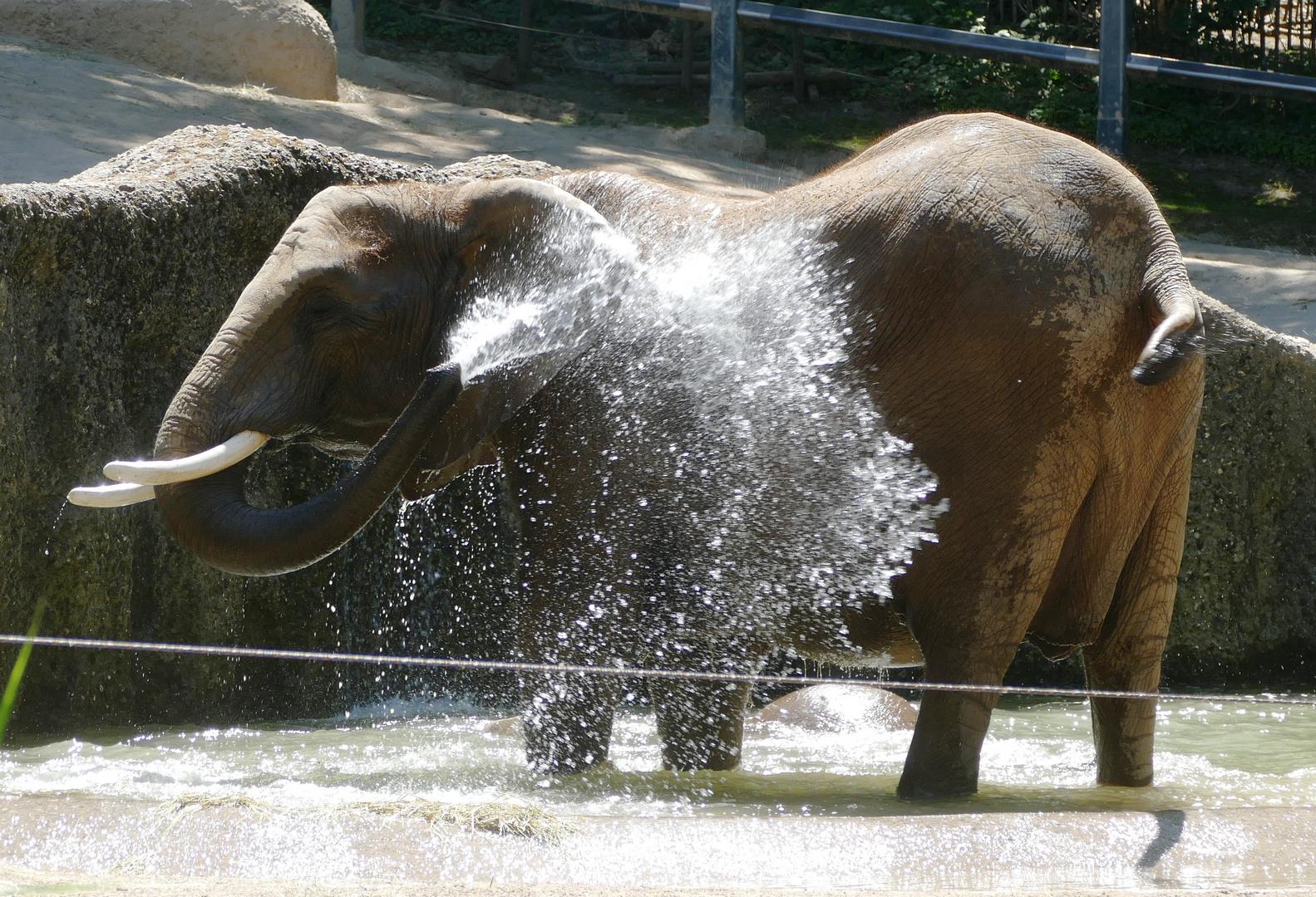 Badetag bei den Elefanten