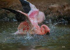 Badetag Flamingo