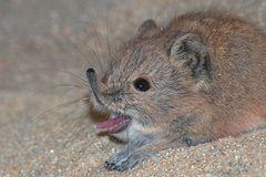 Bääääääääh! Ich bin keine Maus!