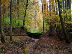 Bächlein im Wald