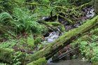 Bächlein in einem wunderschönen Regenwald