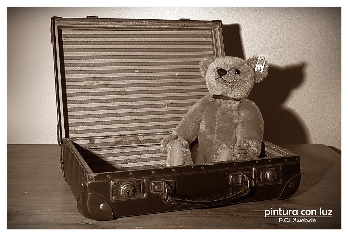 Bär im Koffer
