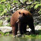 Bär (Wer stört?)