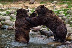 Bären....