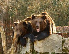 Bären III