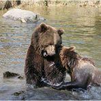 Bärenbrüder.