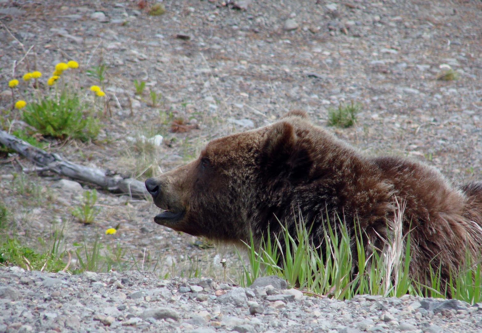 Bärenbrüder in Real - Part 1
