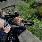 Bärenfotografen