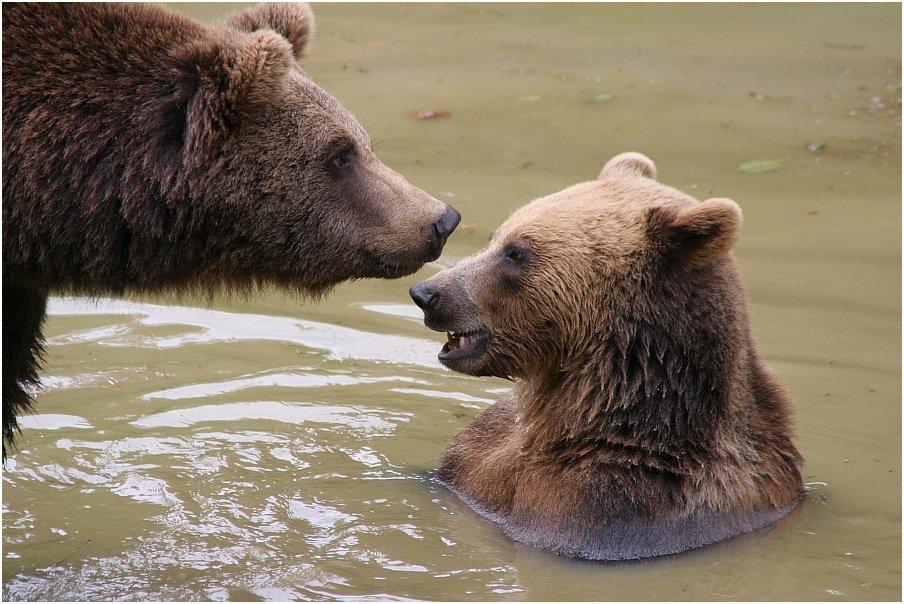 Bärengeflüster...