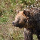 Bärenglück