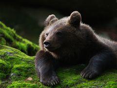 Bärenkind