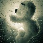 Bärenkräfte leuchten