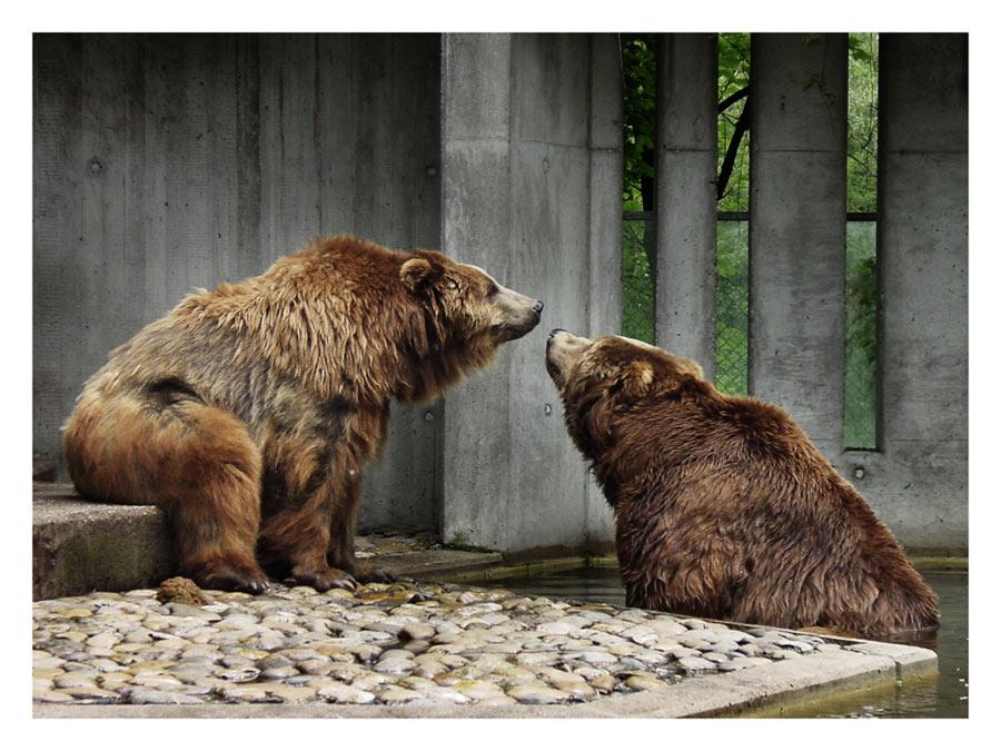 Bärenkuss