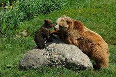 Bärenmama und ihr Töchterle