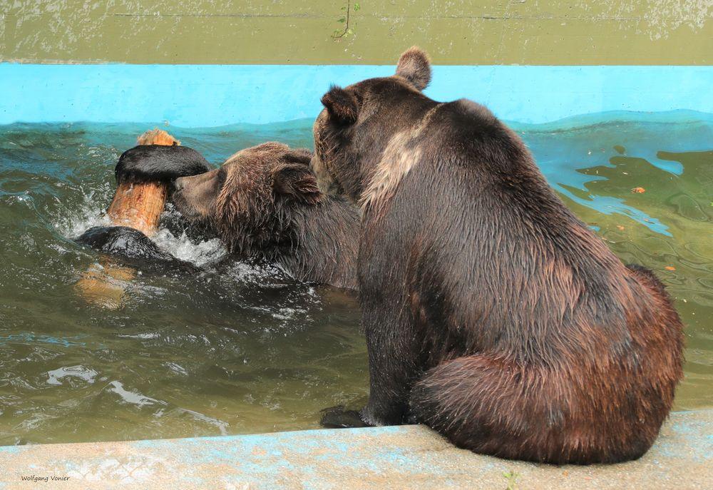 """Bärenpaar bei """"Stöckchenspiel"""""""