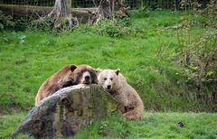 Bärenpärchen
