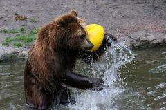 Bärenspiel