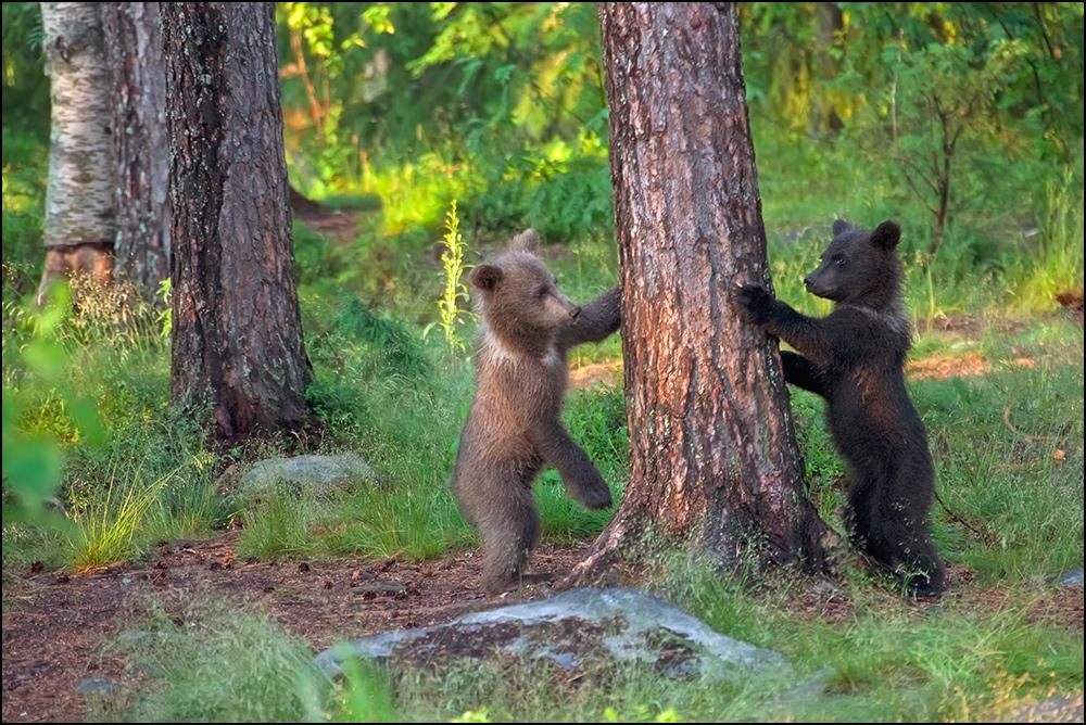 Bärenspiele :-)