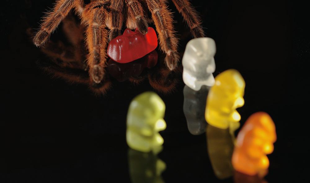 Bärentöter