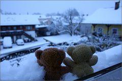 Bäriger Morgen im Blauen Winterwonderland