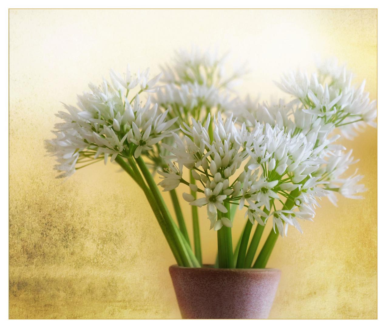 Bärlauch-Blüten...