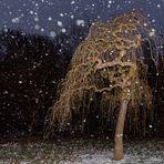 Bäumchen im Schneefall