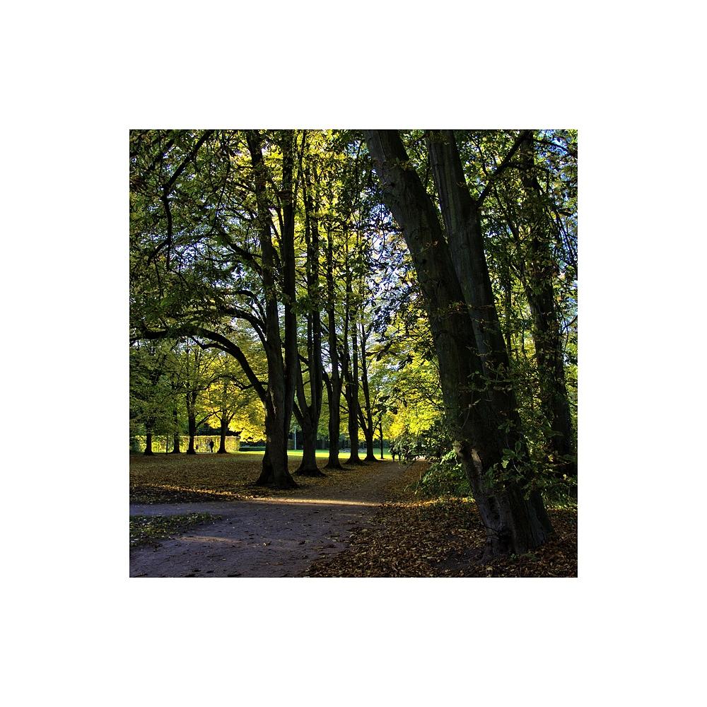 *Bäume (3)*