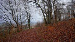 "Bäume am Hutsberg (árboles en la montaña ""Hutsberg"")"