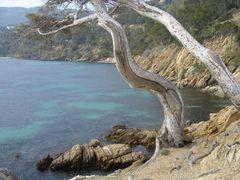 Bäume am Meer