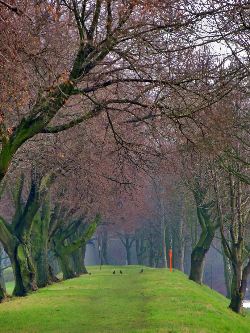 Bäume am Ruhrdamm