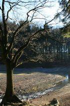 Bäume am See 2