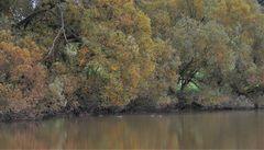 Bäume am See (árboles en el lago)