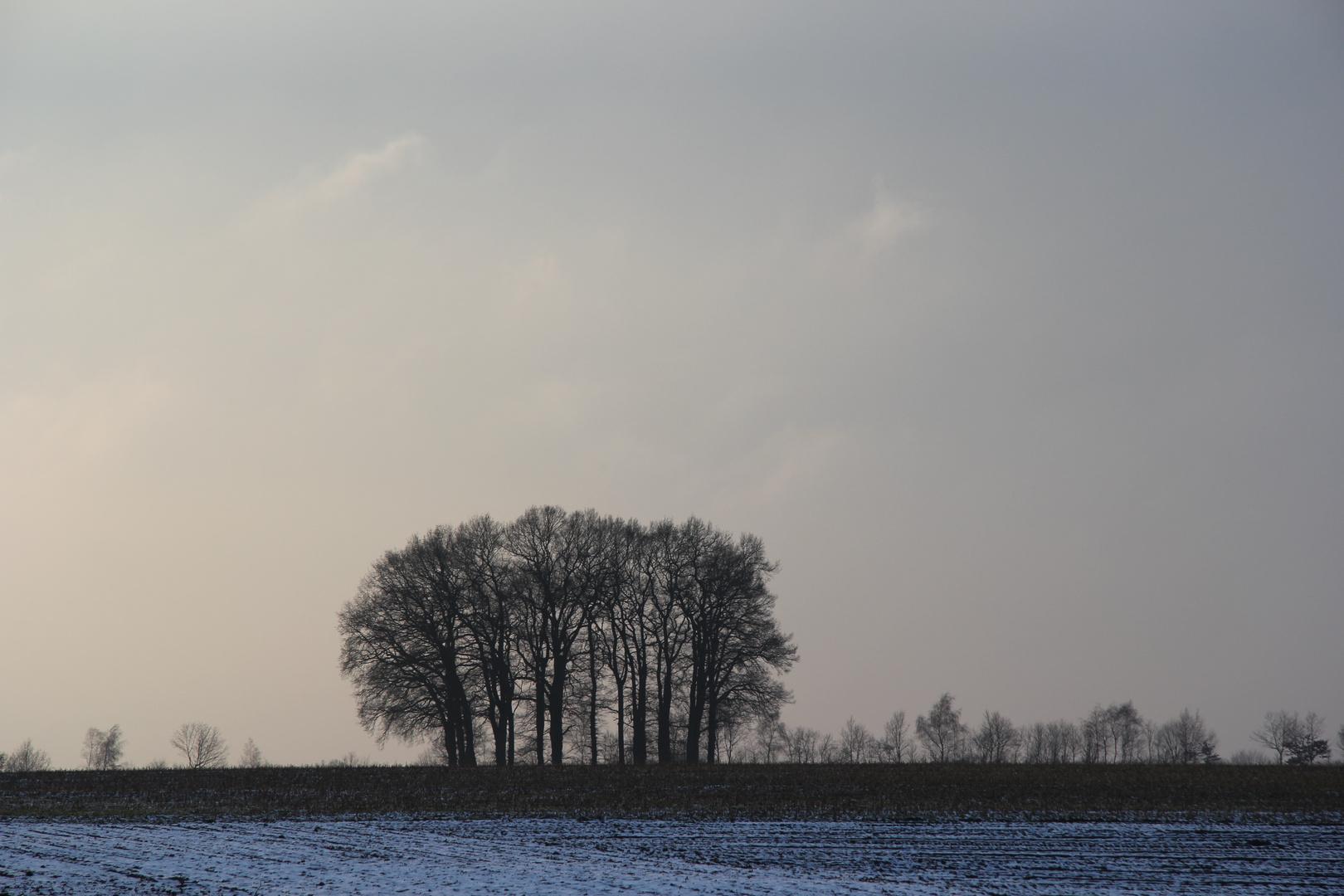Bäume am Winterabend