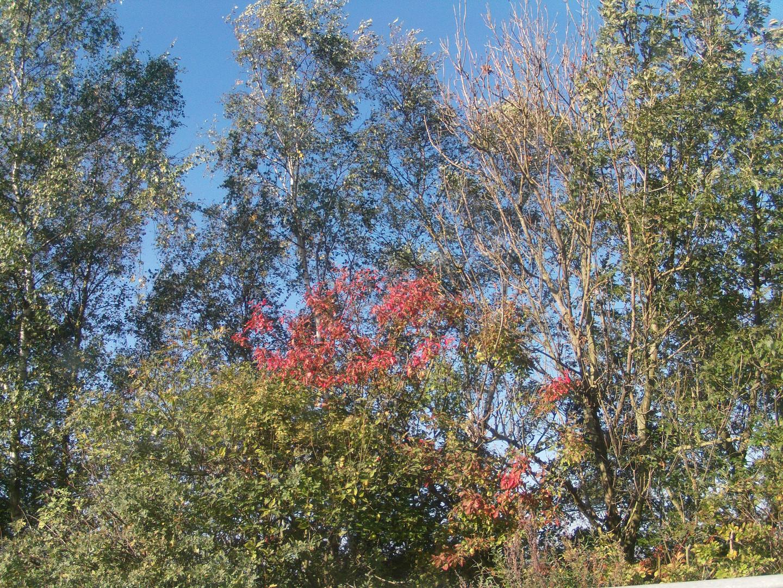 Bäume an der Autobahn