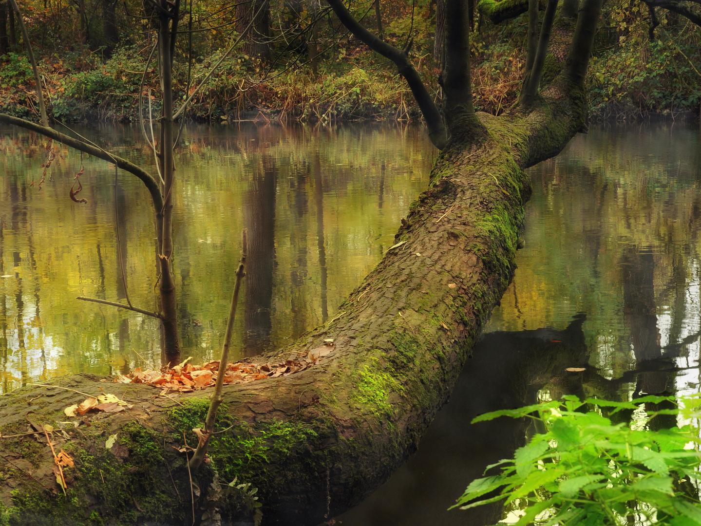 Bäume an der Lenne