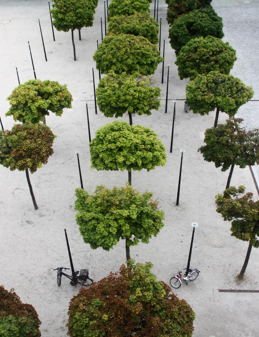 Bäume an der Museumsmeile