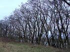 Bäume an der Oder