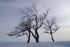 Bäume auf einer Jurahöhe