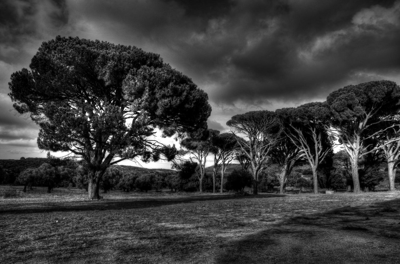 Bäume auf Kreta